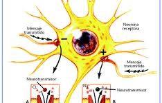 Revelan los efectos de ciertos fármacos sobre los receptores de serotonina
