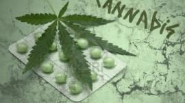 Uruguay: Analizan que el cannabis estatal se venda en farmacias