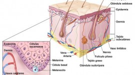 Científicos argentinos desarrollan nueva terapéutica para el melanoma cutáneo