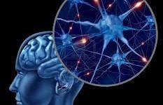 """Presentan """"el Google Earth"""" del cerebro humano"""