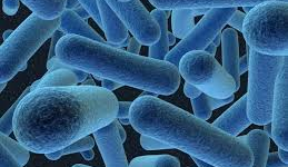 Alertan sobre nueva bacteria resistente a todos los antibióticos