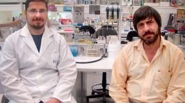 Científicos argentinos convierten el colesterol en una provitamina