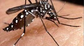 Riesgo de dengue: medidas preventivas