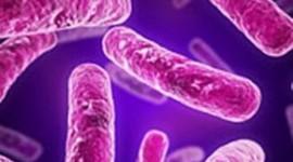 El vinagre mata la tuberculosis resistente a fármacos