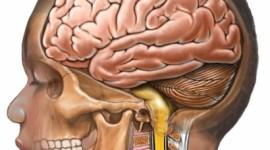 11 químicos que pueden dañar el desarrollo cerebral del niño
