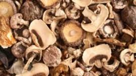 Una especie de hongo podría tratar el cáncer cervical