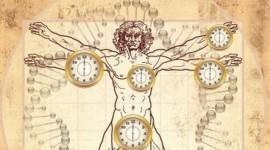 Identifican un gen que sabotea el reloj biológico