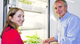 Un hallazgo argentino sobre la fotosíntesis cambiaría los libros de biología