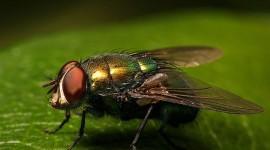 Investigadores argentinos crearon moscas que sufren Alzheimer