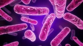 """Hallan el """"Talón de Aquiles"""" de las bacterias"""