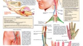 Un mendocino descubrió las causas del dolor crónico