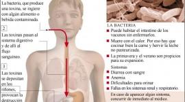 El Ministerio de Salud difunde recomendaciones para evitar el Síndrome Urémico Hemolítico
