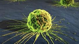 Descubren cómo los cánceres pueden evadir el tratamiento