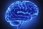 El cerebro recicla habilidades ancestrales para afrontar nuevos retos