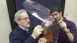 El adiós al plástico está en el caparazón de un insecto
