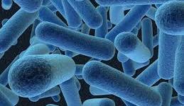 Cada persona alberga un kilo de bacterias
