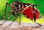 Alerta en Córdoba por 70 casos de dengue