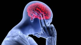 Investigan el rol del sistema inmunológico en el desarrollo del Alzheimer