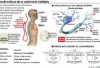 Día Mundial de la Esclerosis Múltiple: la importancia del diagnóstico preciso
