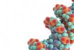 Revelan el mapa epigenómico de los principales órganos humanos