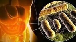 Descubren una bacteria que podría prevenir la diabetes tipo 1