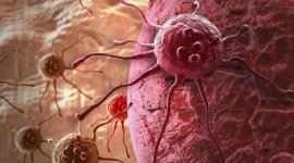 Hallan un fármaco que sería capaz de matar células cancerosas a través de la sobreestimulación