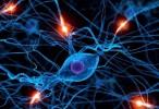 La falta del receptor D1 conduce a la lentitud de movimientos en la enfermedad de Parkinson