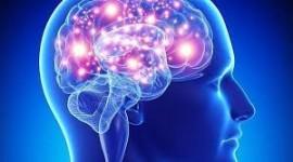 La respuesta inmune antiviral altera la actividad cerebral