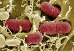 Científicos de la Universidad de Harvard modifican el código genético de una bacteria reduciendo su genoma
