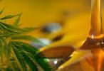 Diputados emitirá dictamen para el uso medicinal del cannabis