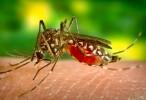 Medio ambiente y salud: Los insectos introducen contaminación plástica en la cadena alimentaria