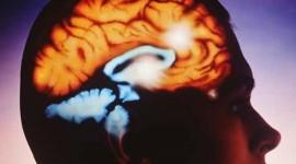 El rol del colesterol en la regulación de proteínas cerebrales