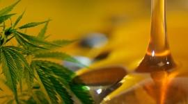 Hoy podría convertirse en ley el uso medicinal del cannabis en todo el país