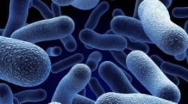 """Antiácidos aumentan el riesgo de recurrencia de infección por """"Clostridium difficile"""""""