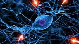 Científicos logran incrementar la esperanza de vida en ratones con esclerosis lateral amiotrófica
