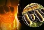 Las bacterias intestinales pueden convertir un nutriente común en un compuesto que aumenta la coagulación