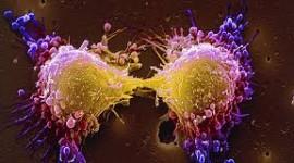 """Consiguen """"apagar"""" las células del cáncer"""