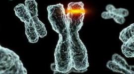 Mutación ocurrida hace 50 mil años fue una posible adaptación contra la lepra