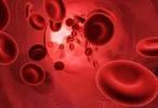 Avance científico: crean células madre de la sangre en laboratorio