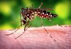 Así se expandió el virus del zika