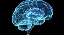Investigadores descubren inflamación cerebral en personas con trastorno obsesivo compulsivo