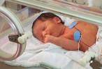 Estudio internacional asocia síndrome de distrés respiratorio en prematuros con un hongo