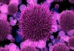 Descubren 44 nuevos virus en los océanos