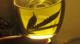 Laboratorios públicos fabricarán aceite de cannabis