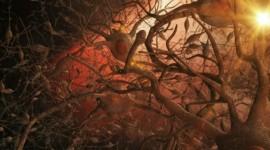 En investigación: Una enzima humana puede reducir los amiloides neurotóxicos
