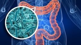 Un ensayo busca mejorar el sistema inmune de personas con VIH con el trasplante de bacterias intestinales