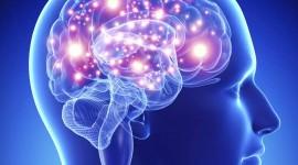 Científicos hallan una cascada tóxica que lleva a la degeneración neuronal en el Parkinson y cómo interrumpirla