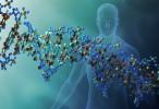 Hallan 6 nuevas mutaciones asociadas con la celiaquía