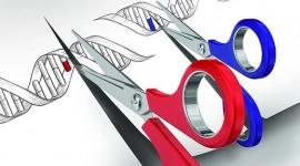 """El """"corta y pega"""" genético que no altera el ADN"""