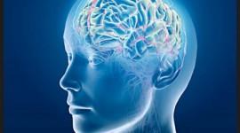 Investigadores descubren la causa de la sensibilidad cerebral a la falta de oxígeno